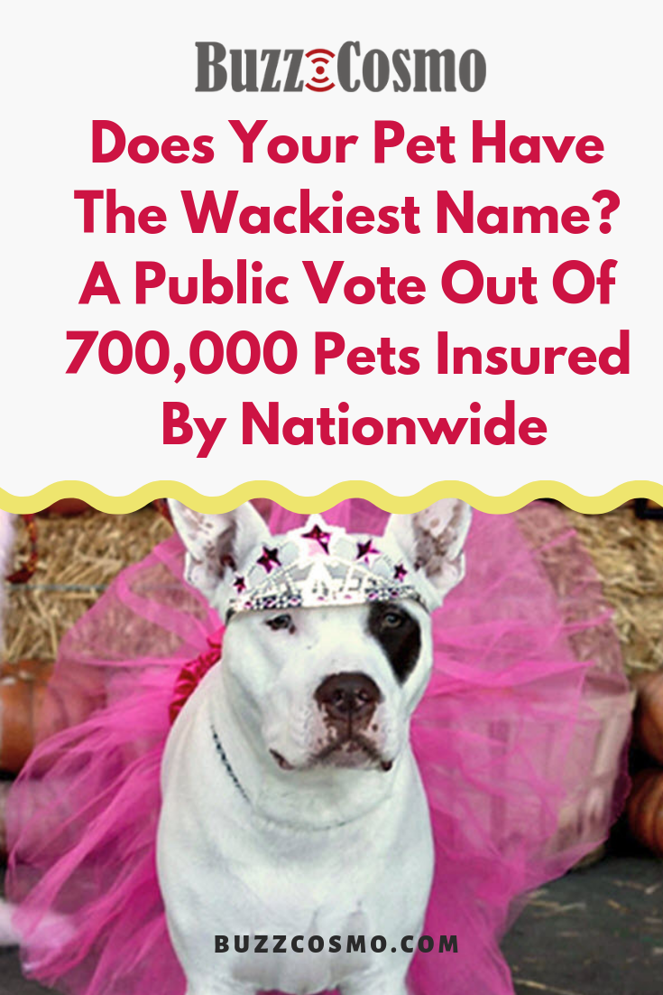 Does Your Pet Have The Wackiest Name A Public Vote Out Of 700 000 Pets Insured By Nationwide Sick Pets Pets Animal Medicine