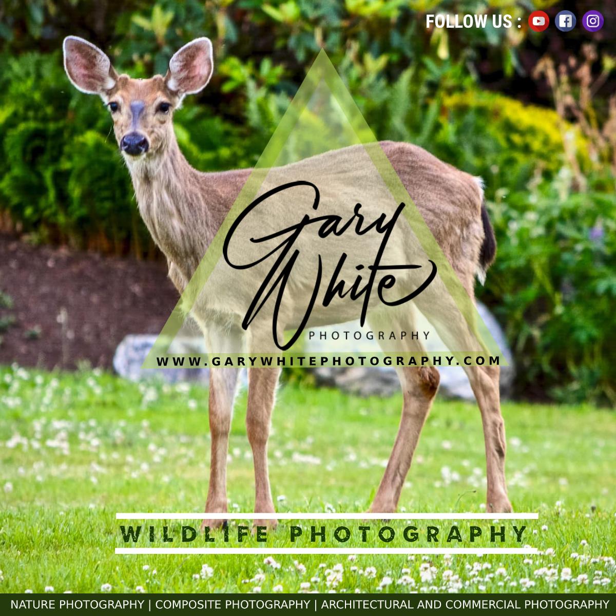 Gary White Photography Australia
