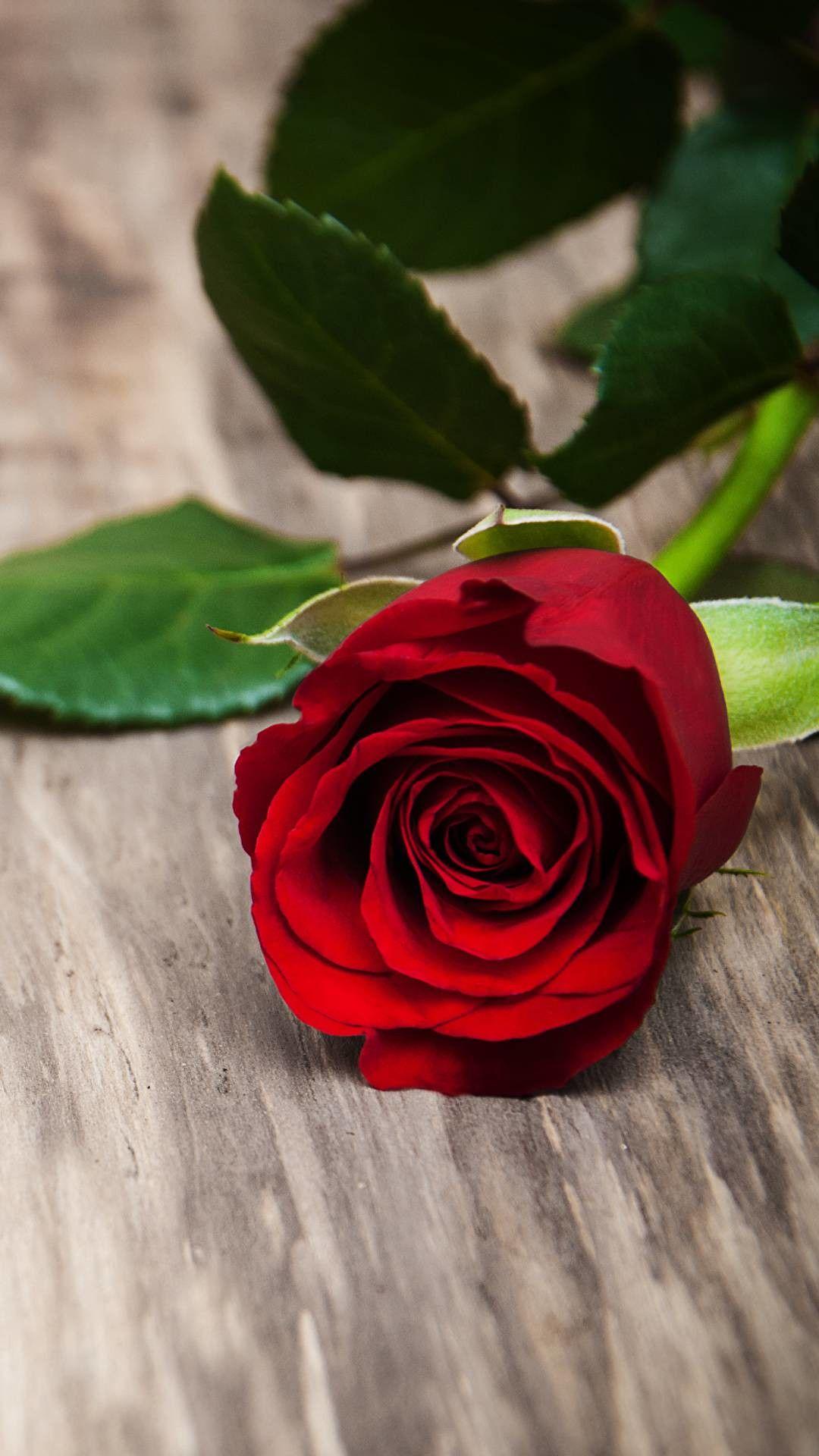 Flower Love Rose Flower Beautiful Rose Flowers Rose Flower Wallpaper