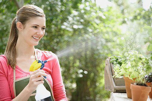 Cuide do jardim sem agrotóxicos