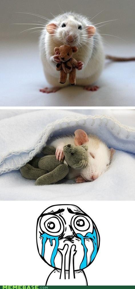 NEVER WAKE UP Cute animals, Baby animals, Cute baby animals