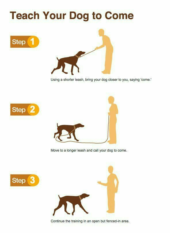 how to train your dog to come