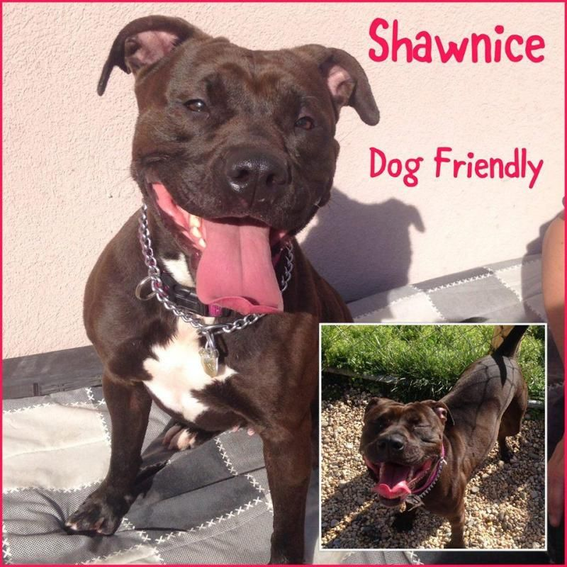 Adopt Shanice On Petfinder Dog Friends Cat Adoption Animal Shelter