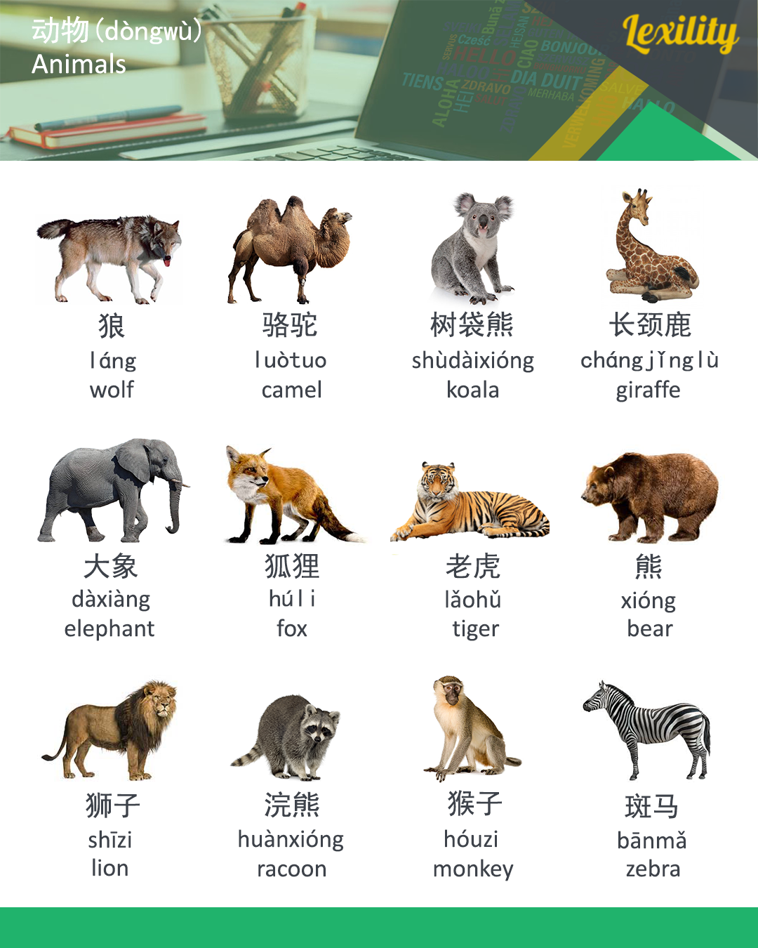 Animals in Chinese | Learning Chinese | Chinese english ...