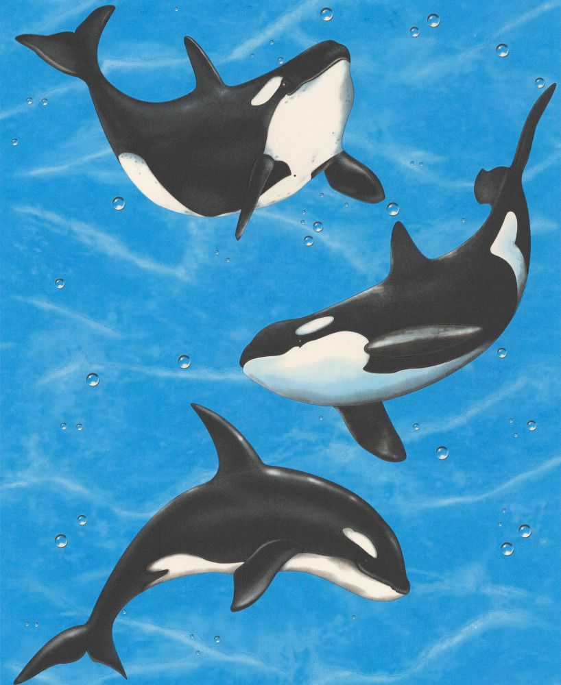 Orca blue wallpaper by albany wallcovering pinterest blue orca blue wallpaper by albany altavistaventures Gallery