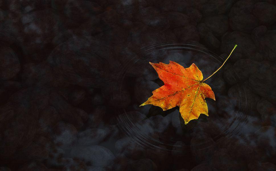 Maple Leaf Hd Wallpaper Autumn Leaves Wallpaper Wallpapers Pc Leaf Wallpaper Autumn leaves wallpaper hd