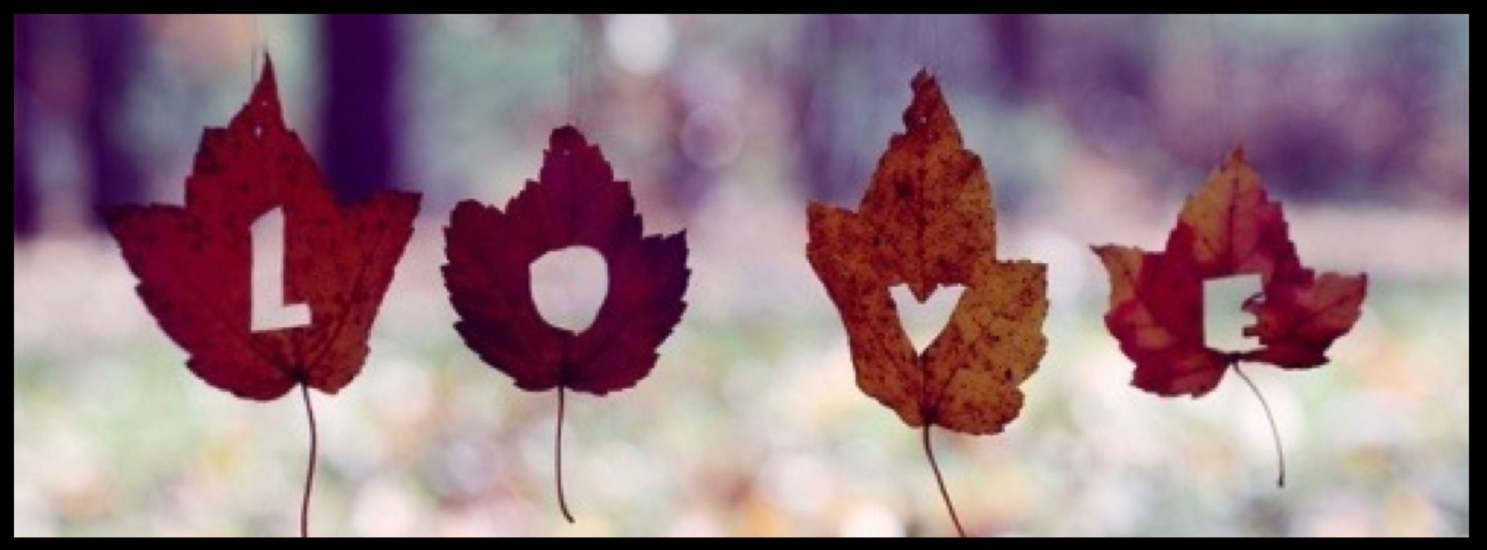 Love in Fall facebook cover fotos