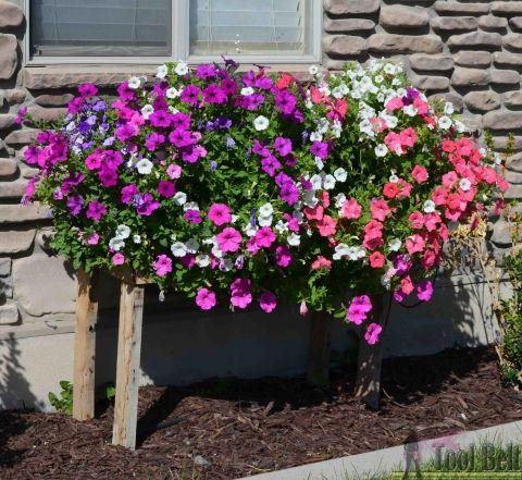 Pallet Planter Box For Cascading Flowers Pallets Garden 400 x 300