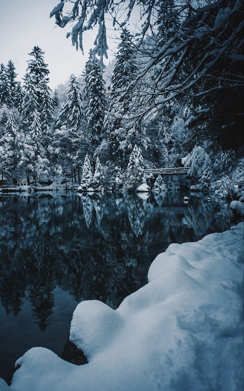 Wallpaper Lake Winter Snow Snowy Branches Winter Snow Snow Wallpaper Hd wallpaper snow winter nature branches