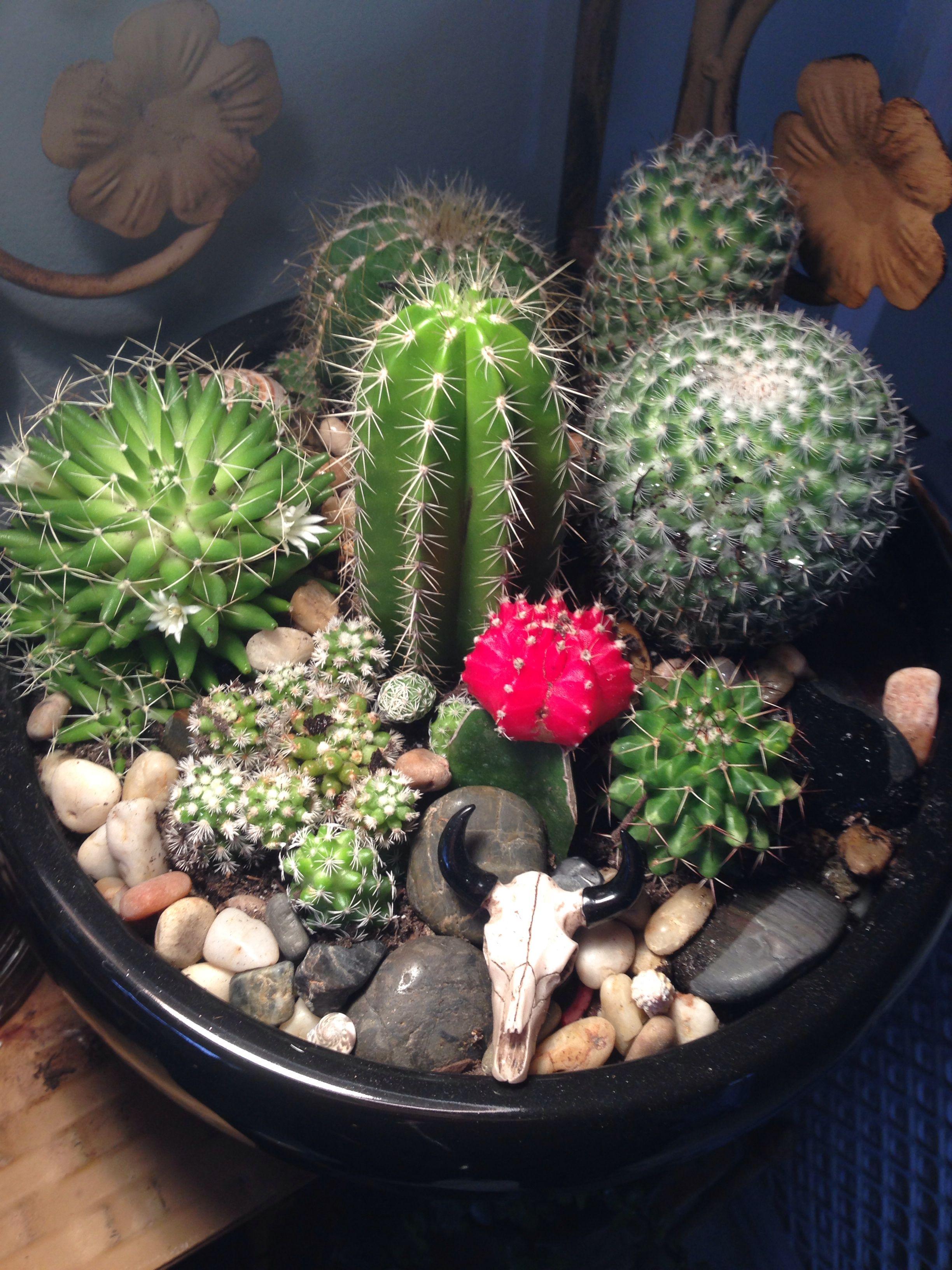 Cactus Terrarium Plants Cactus Terrarium Succulents