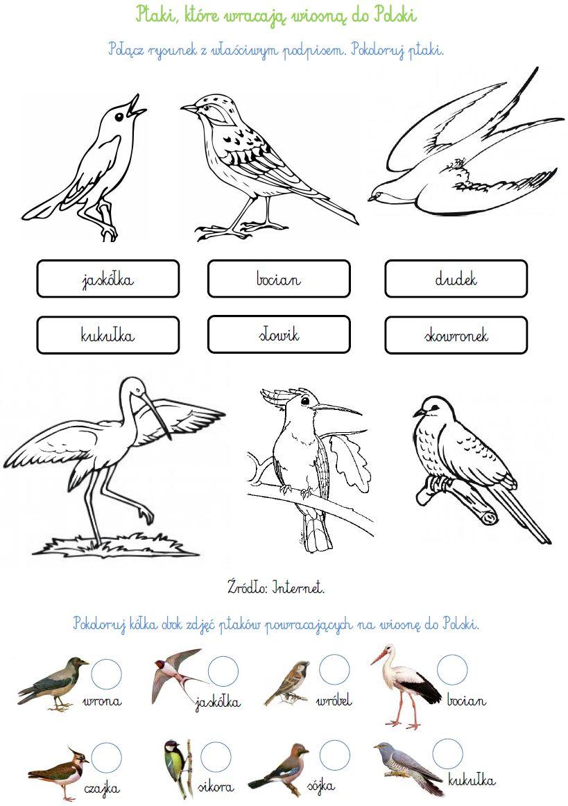 Ptaki Wedrowne Http Www Ekokalendarz Pl Wp Content Uploads Pakiet 05 12 Swiatowy Dzien Ptakow Wedrownych P Polish Language Science For Kids Kids Education