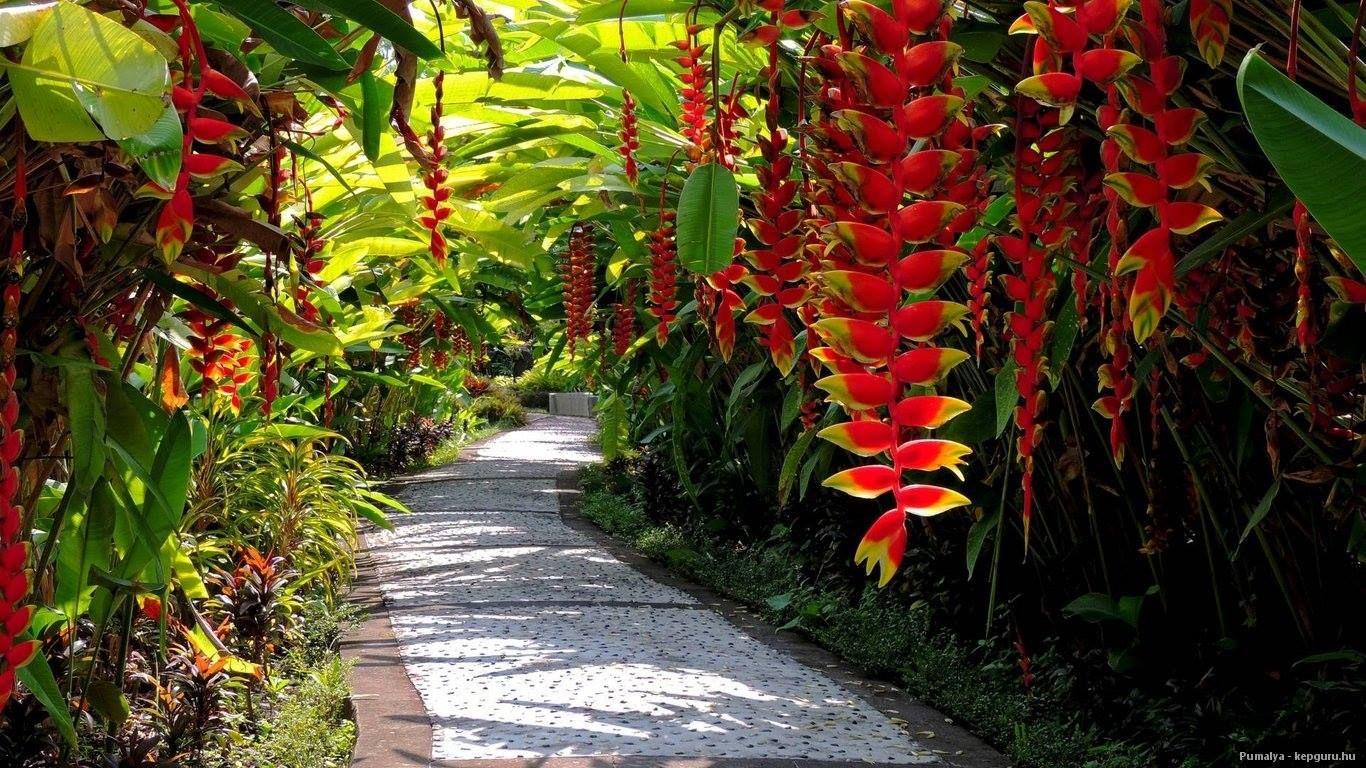 Heliconia La Planta Preferida En Jardines Tropicales Y: Pin De Fátima Fraga Em Flores