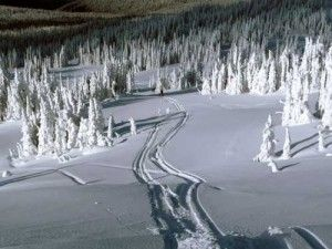 Snowmobile tracks on Queest Mountian    Just me n the snow!!! Amen