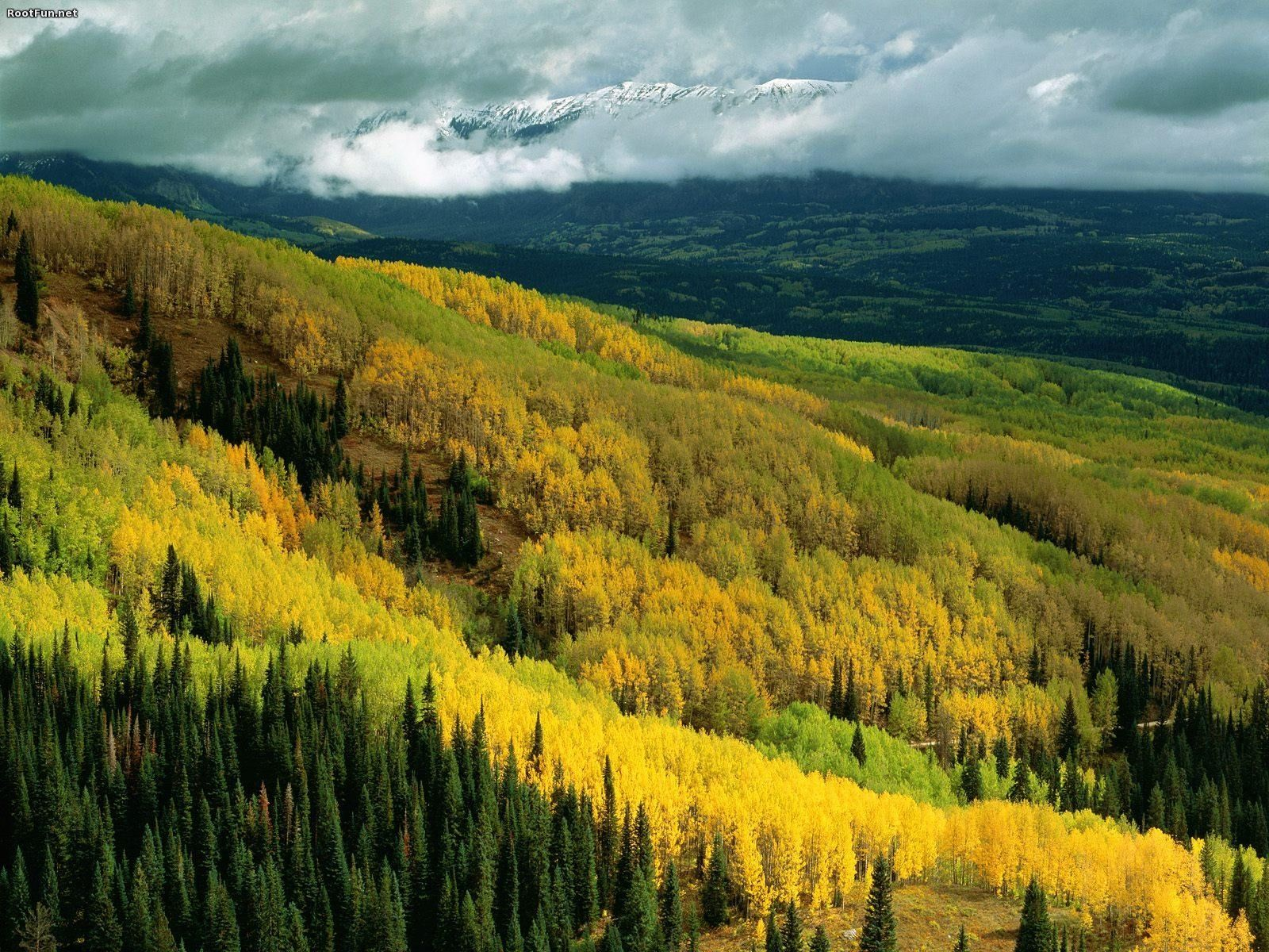 Early fall in Ohio Pass, up the road from the ranch  http://rootfun.net/images/2012/02/Aspen-Forest-in-Early-Fall-Ohio-Pass-Gunnison-National-Forest-Colorado.jpg  Aspen-Forest-in-Early-Fall-Ohio-Pass-Gunnison-National-Forest-Colorado.jpg (1600×1200)