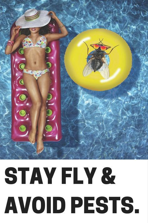 Backyard Pests summer pests shouldn't ruin your outdoor parties. keep the fun in