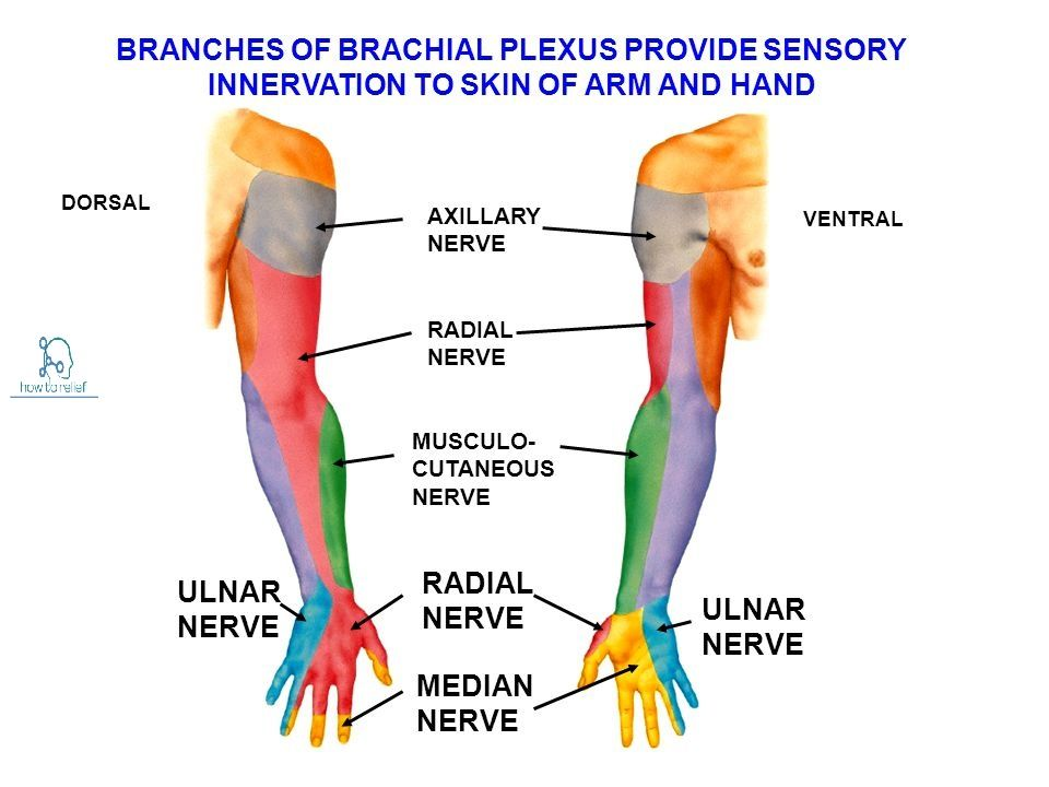 Radiculopathy Vs Peripheral Neuropathy additionally D C Ccd Fe Dca F C moreover N Ue Roots likewise A D Bfe F Ce F C B F further Eee Cba D Ec A A A A E. on c5 c6 nerve root distribution