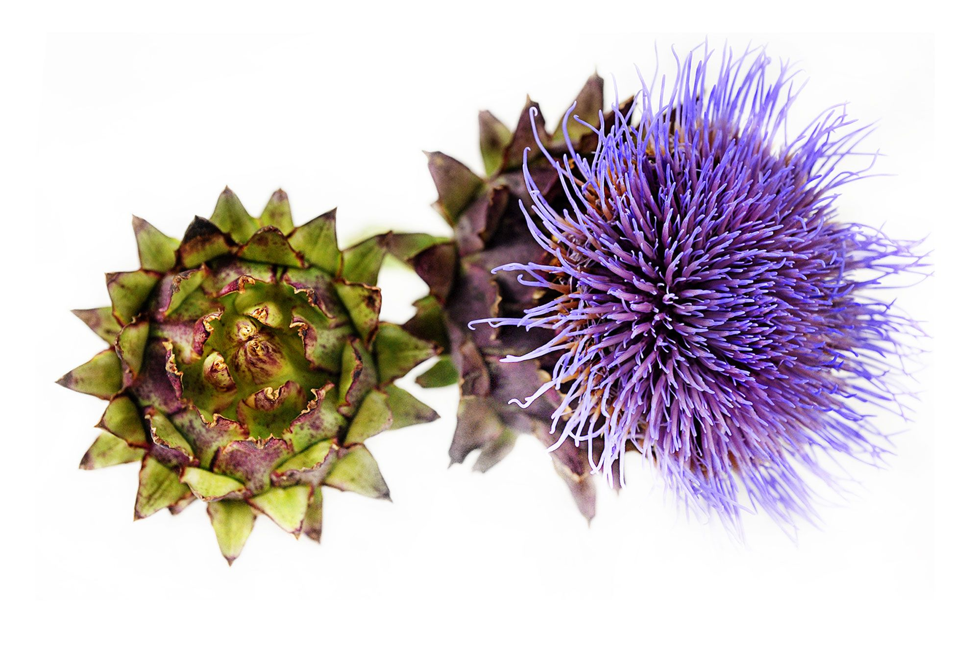 Buy herbs online - Buy Heirloom Garden Seeds Vegetables Rare Flowers And Herbs Online Over 1800 Varieties