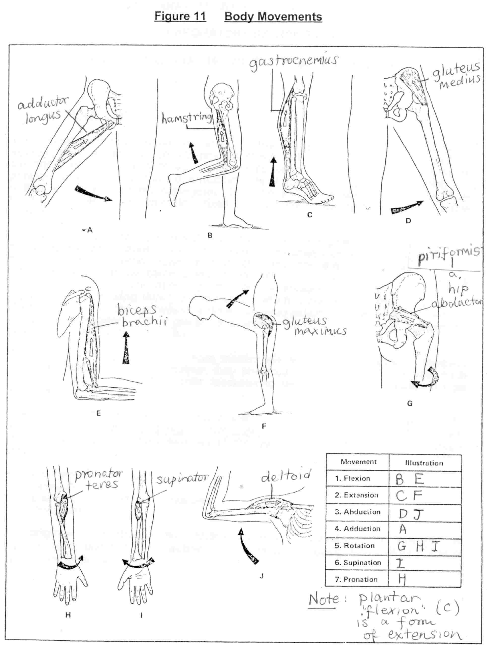 Wrist Joint Movements