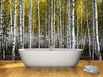 Autumn birch forest wall mural cedar grove pinterest for Aspen tree wall mural