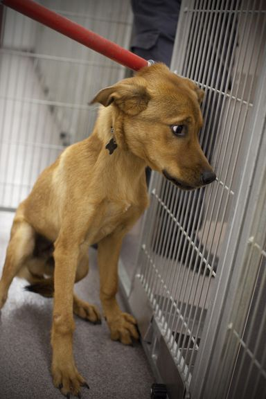 The Reality Of Euthanasia At Animal Shelters Another Reason To Adopt Not Shop Animal Shelter British Dog Animals