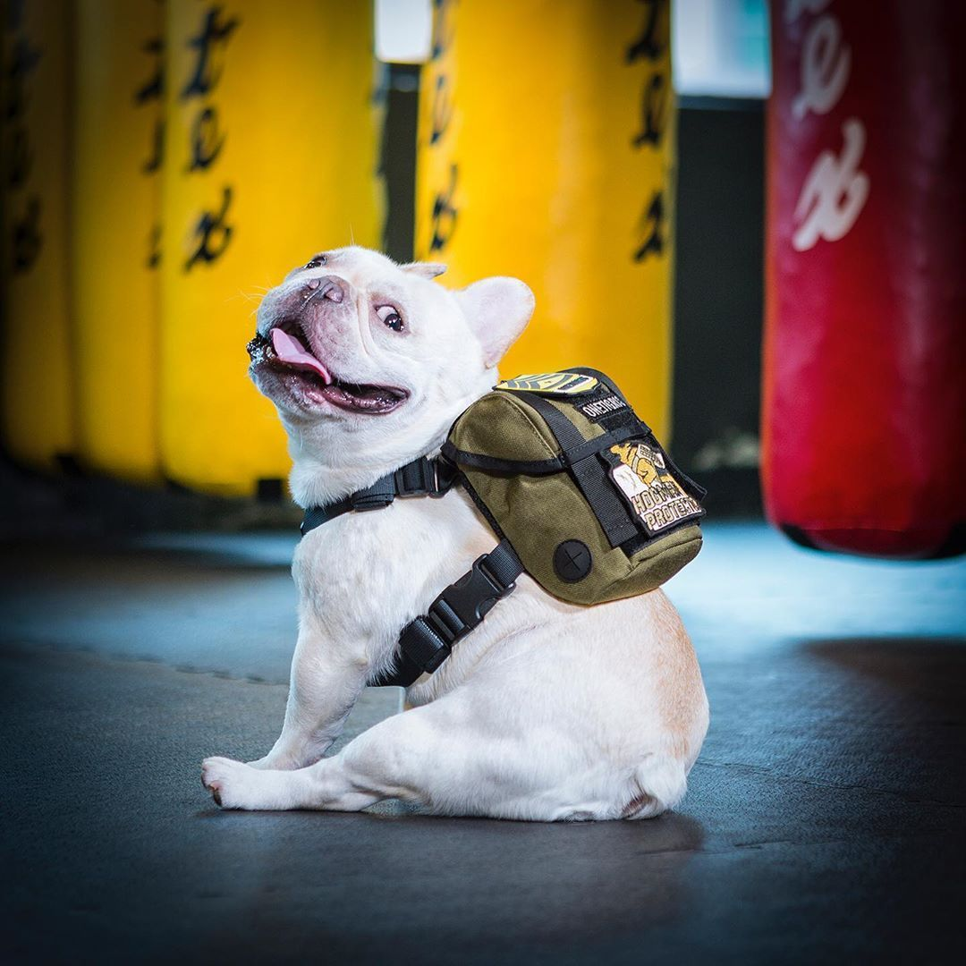 Here Comes Our New Eureka K9 Backpack A Tactical Pack For Mini