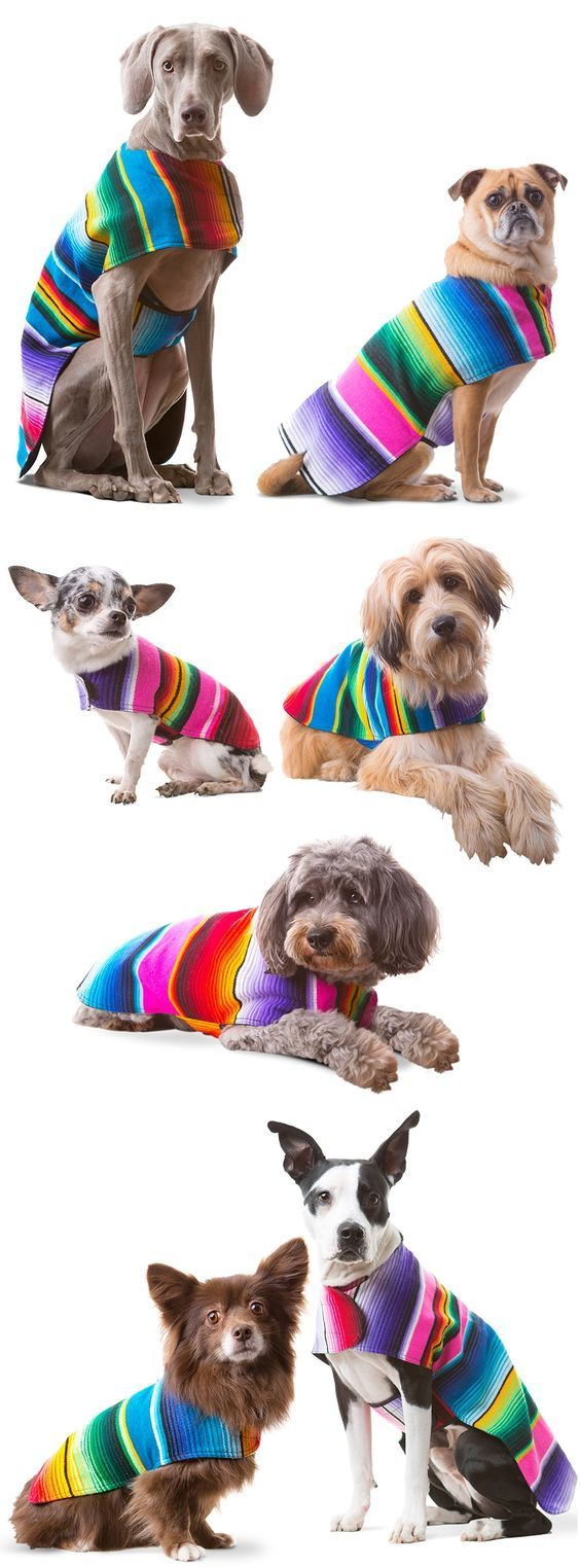 Pin by Peters Marianne on Collection Dog poncho, Dog