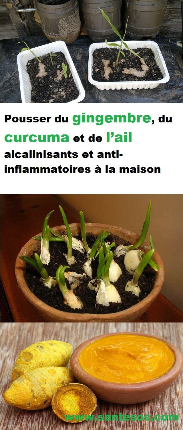 comment faire pousser du gingembre du curcuma et de l ail alcalinisants et anti inflammatoires. Black Bedroom Furniture Sets. Home Design Ideas