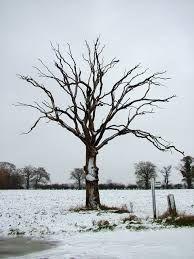 dead tree - Recherche Google