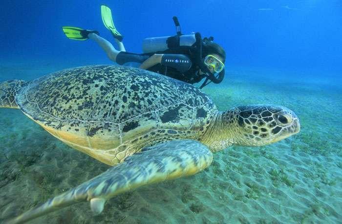 Visite d'une tortue de mer   VideoMan