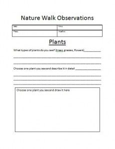 Plant Growth Primary Teaching Resources and Printables - SparkleBox