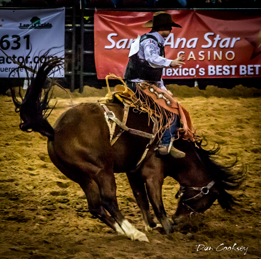 Saddle Bronc Rider New Mexico Stampede Rodeo Rodeo