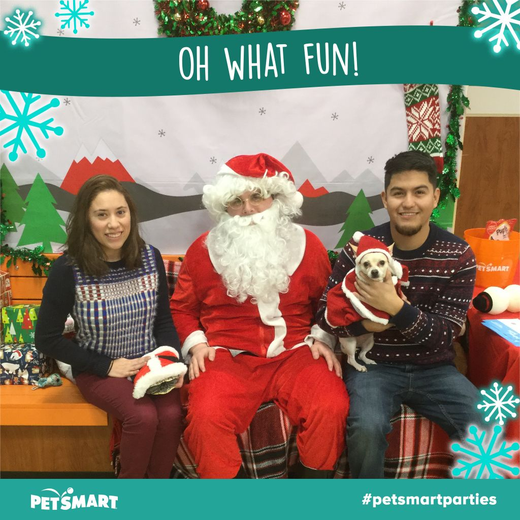 Here's my Pet Photo Pets, Christmas sweaters, Fun