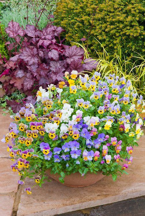 Patio Flower Containers Purple Heuchera Plant Flower