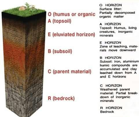 Soil Profile Soil Layers Soil Horizon Organic