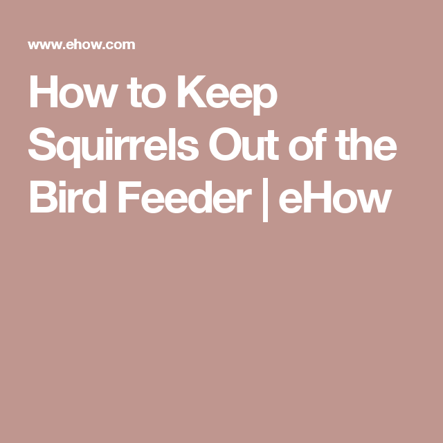 How to keep squirrels out of the bird feeder bird feeder - How do you keep squirrels out of your garden ...