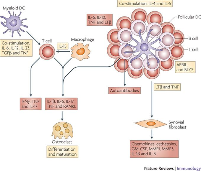 pathophysiology of rheumatoid arthritis pdf