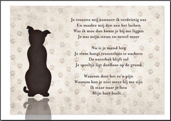 Stil Verdriet Gedicht Google Zoeken Honden Gezegden
