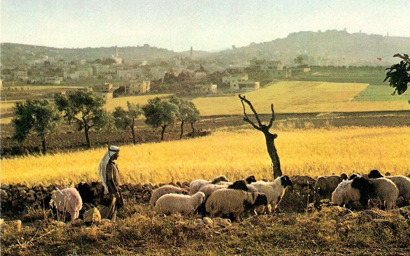 """Nomadismo pastoral. Entrada """"Porcofilia y porcofobia"""" (1-02-2014), en el blog """"Individuo-Sociedad-Cultura-Espacio"""". Enlace: http://cienciashumanasysociales.blogspot.com.es/2014/02/porcofilia-y-porcofobia.html"""