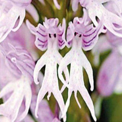 Robot Check Strange Flowers Orchid Flower Unique Flowers