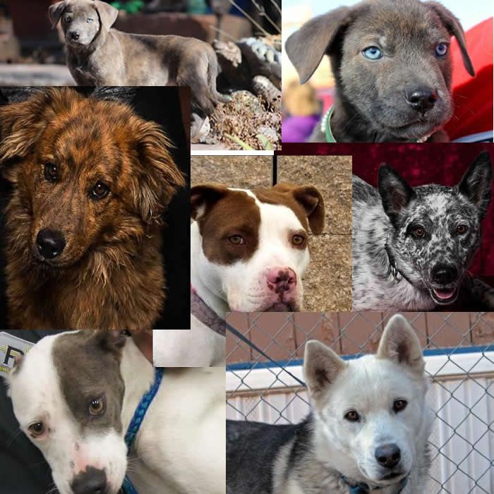 Dogs For Adoption Or Sale In New Mexico Http Www Doggielife Com