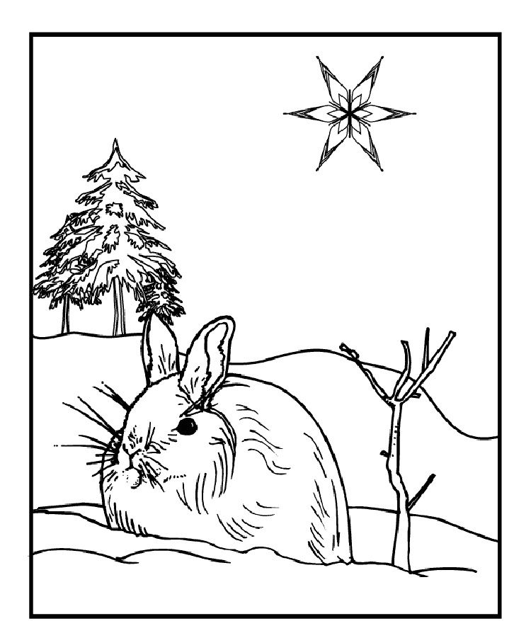 Winter Animals Coloring Pages Free Bunny Coloring Pages Animal Coloring Pages Coloring Pages Winter