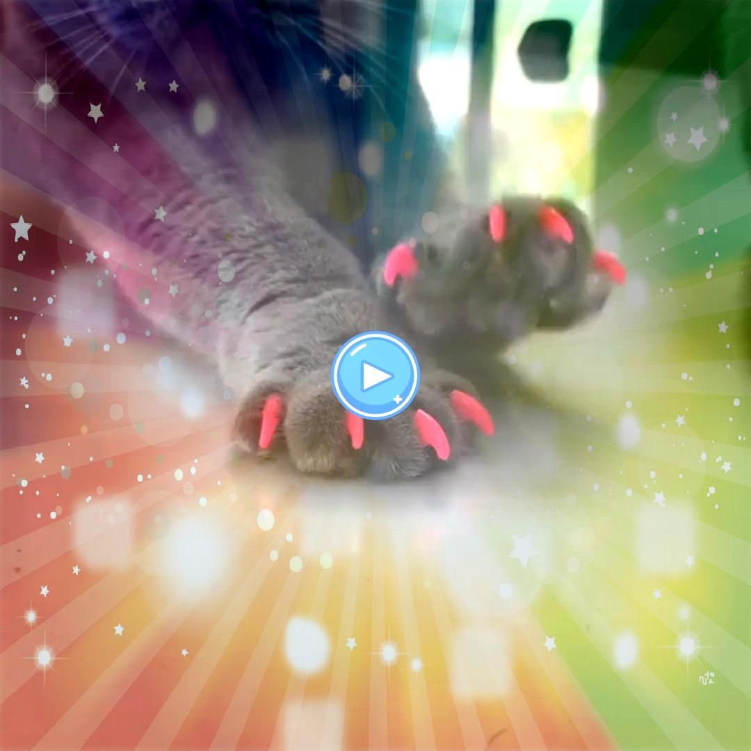 Colorful Pet Cat Claw Covers Environmental Dog Nail Decoration Covers With Glue 20pcs Colorful Pet Cat Claw Covers Environmental Dog Nail Decoration Covers with Glue Dogs...