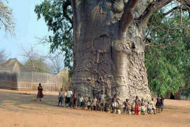 A 2000 year old tree in South Africa known as the 'Tree of Life' (Baobab). Amazing to consider really.