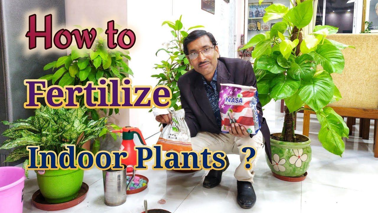 How To Fertilize Your Indoor Plants Youtube Indoor 400 x 300