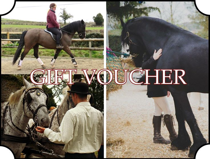 Gift Vouchers Christmas Present Birthday Anniversary Horses Carriages Horse Riding Lessons Experience