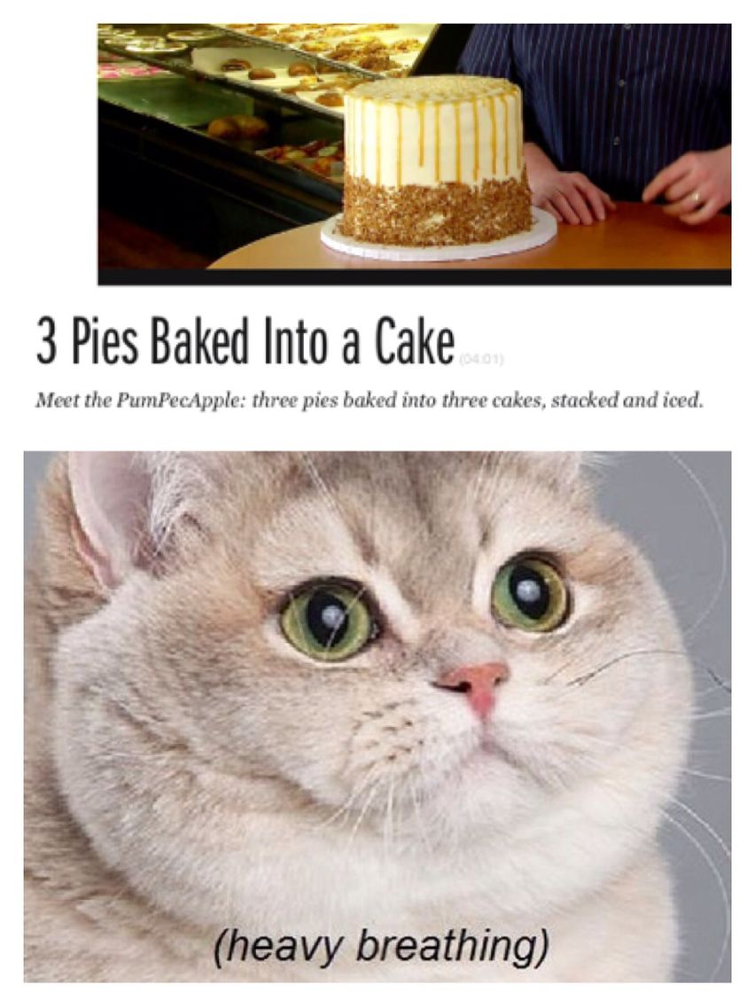 Heavy breathing cat 3 pies baked into cake