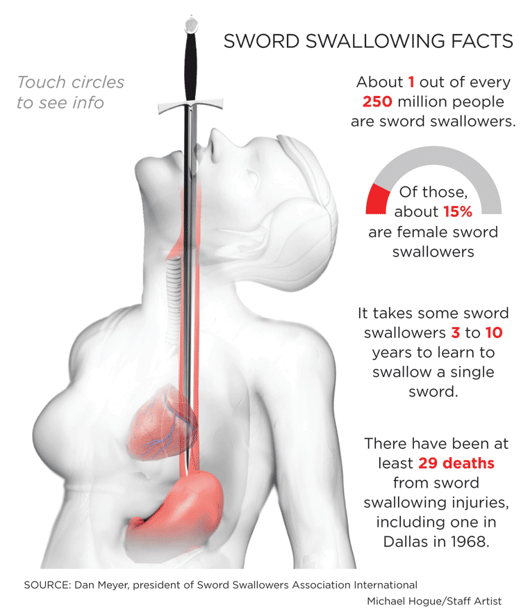 Swallow Diagram Of Human - DIY Wiring Diagrams •