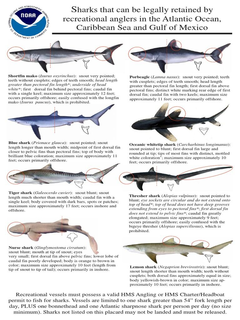 Shark Identification And Federal Regulations For The Recreational Fishery Of The U S Atlantic And Gulf Of Mexico If You Don T Shark Fishing Shark Facts Shark