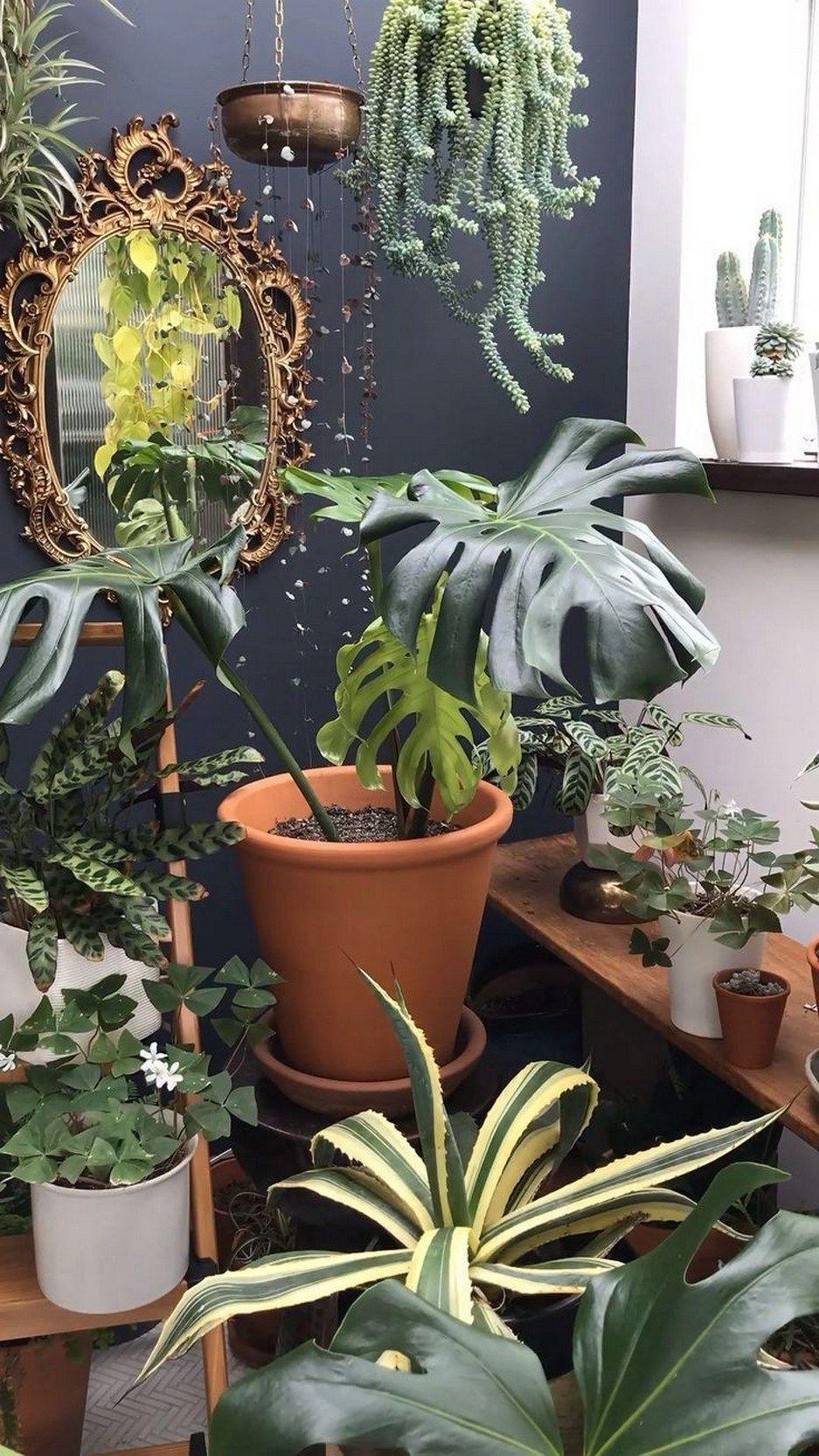 Foto Piante Da Appartamento Verdi ✓the 67 good indoor plants for minimalist homes you can get