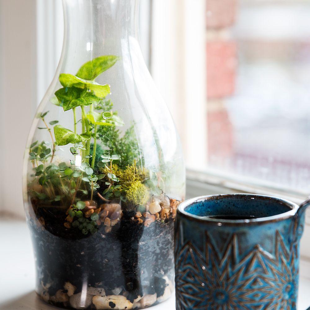 Go Green at Home With This DIY Terrarium | Diy terrarium, Terraria ...